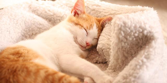 kenkostyleinfo-shape-up-sleep-main